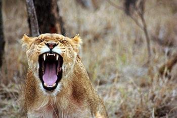 زبان حیوانات برای ارتباط با همنوعان خود
