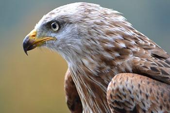 درس پنجم لغات فیلم های زبان انگلیسی falcon باز