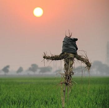 درس شانزدهم لغات فیلم های زبان انگلیسی Scarecrow مترسک