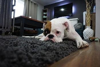 carpet قالیچه درس دهم اصطلاحات آزمون تافل